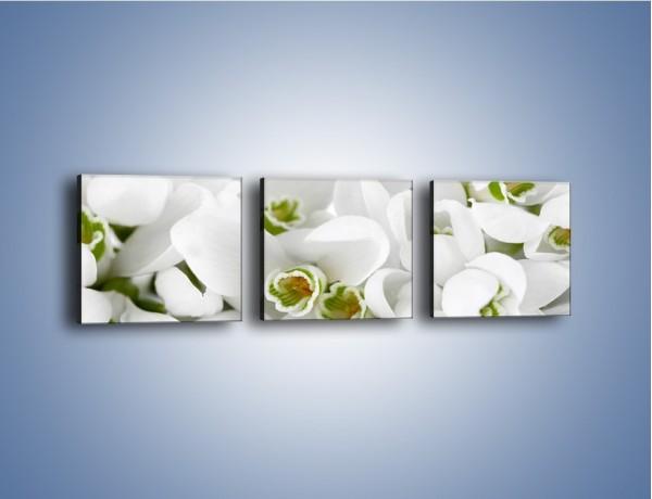 Obraz na płótnie – Niewinne kwiaty z zielonymi oczkami – trzyczęściowy K988W1