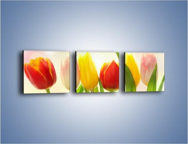 Obraz na płótnie – Sześć małych tulipanków – trzyczęściowy K996W1
