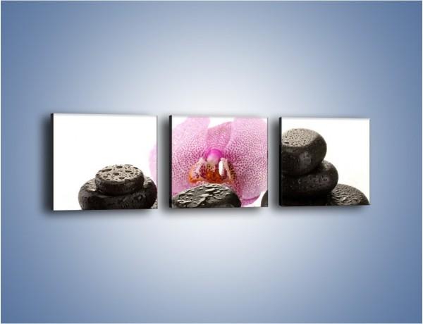 Obraz na płótnie – Kwiat z kamiennym akcentem – trzyczęściowy K999W1