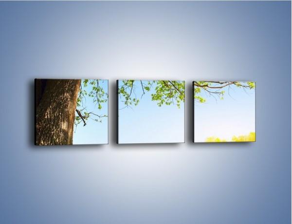Obraz na płótnie – Drzewo na wsi – trzyczęściowy KN024W1