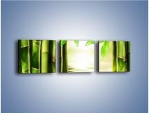 Obraz na płótnie – Bambusowe liście i łodygi – trzyczęściowy KN027W1