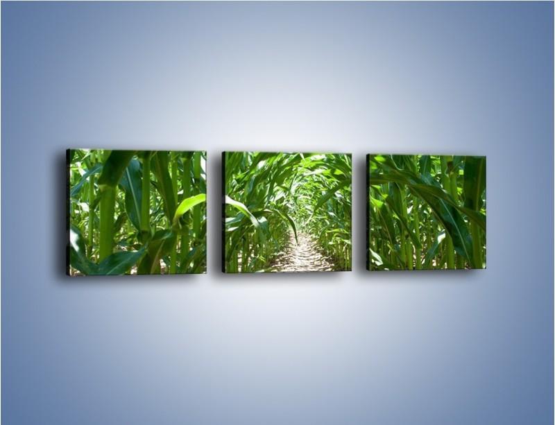 Obraz na płótnie – Labirynt z łodyg – trzyczęściowy KN036W1