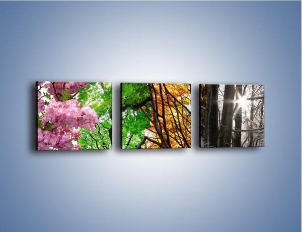 Obraz na płótnie – Drzewa w różnych kolorach – trzyczęściowy KN037W1