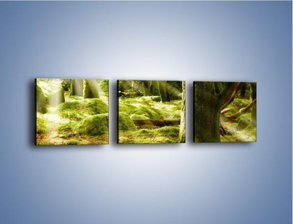 Obraz na płótnie – Las porośnięty mchem – trzyczęściowy KN051W1