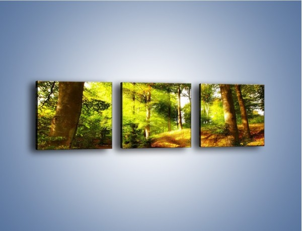 Obraz na płótnie – Spacer po lesie – trzyczęściowy KN077W1