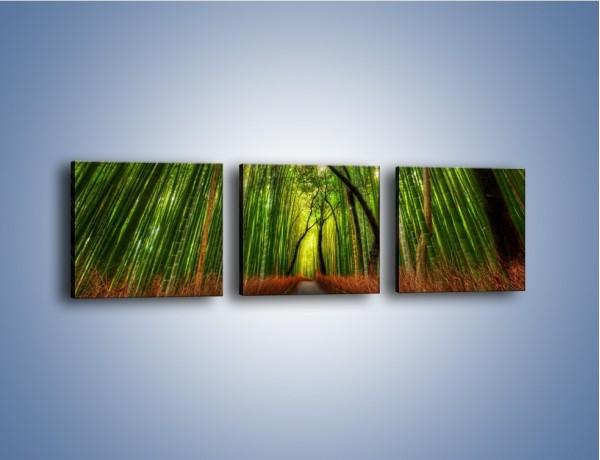 Obraz na płótnie – Przejście pomiędzy drzewami – trzyczęściowy KN1021W1
