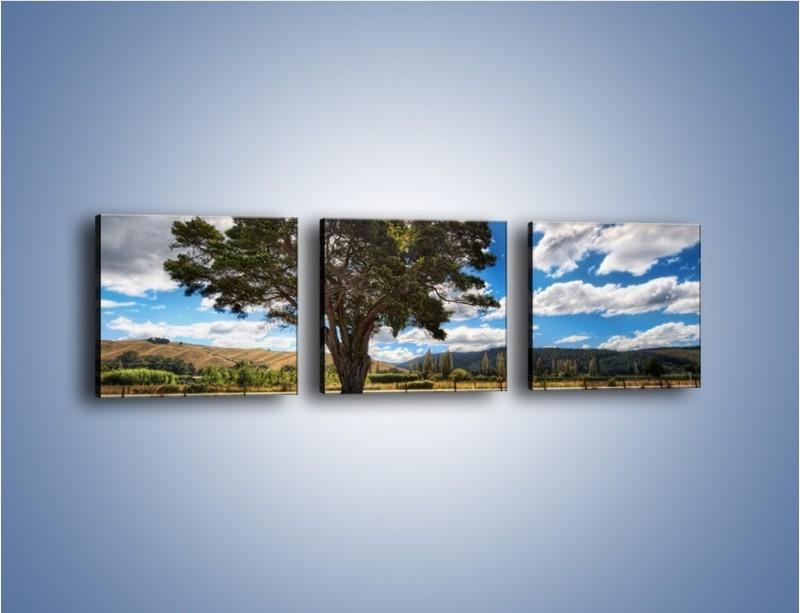 Obraz na płótnie – Cień pod rozłożystym drzewem – trzyczęściowy KN1037W1