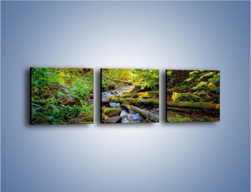 Obraz na płótnie – Drewno ścięte do wody – trzyczęściowy KN1059W1