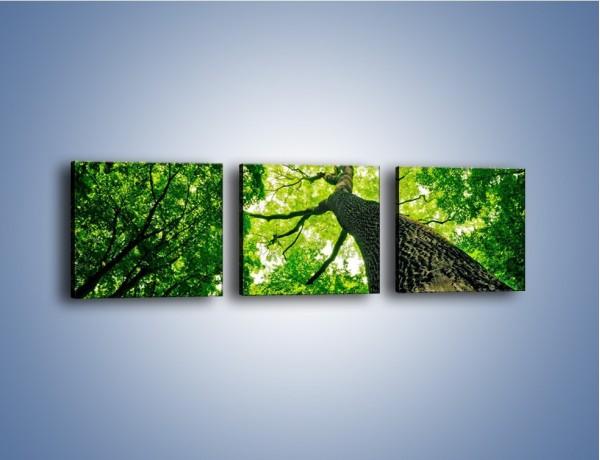Obraz na płótnie – Wysoko na drzewie – trzyczęściowy KN1070W1