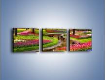 Obraz na płótnie – Aleje kolorowych tulipanów – trzyczęściowy KN1079W1