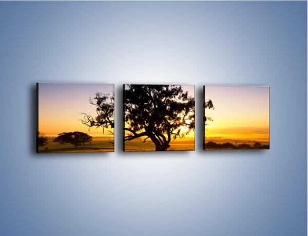 Obraz na płótnie – Drzewa w oddali – trzyczęściowy KN1095W1