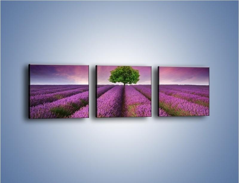 Obraz na płótnie – Droga lawendową do drzewa – trzyczęściowy KN1158AW1
