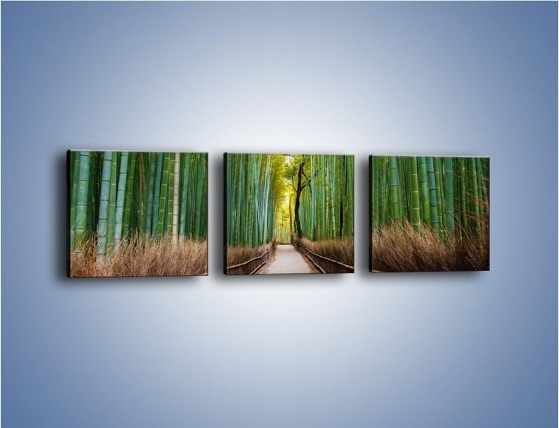 Obraz na płótnie – Bambusowy las – trzyczęściowy KN1187AW1