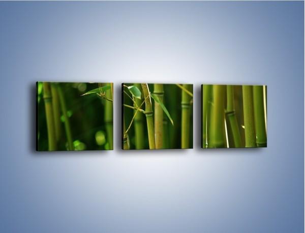 Obraz na płótnie – Bambusowe łodygi z bliska – trzyczęściowy KN118W1