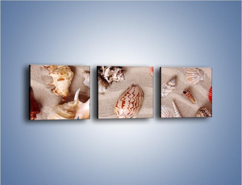 Obraz na płótnie – Kolorowe skorupiaki – trzyczęściowy KN1214AW1