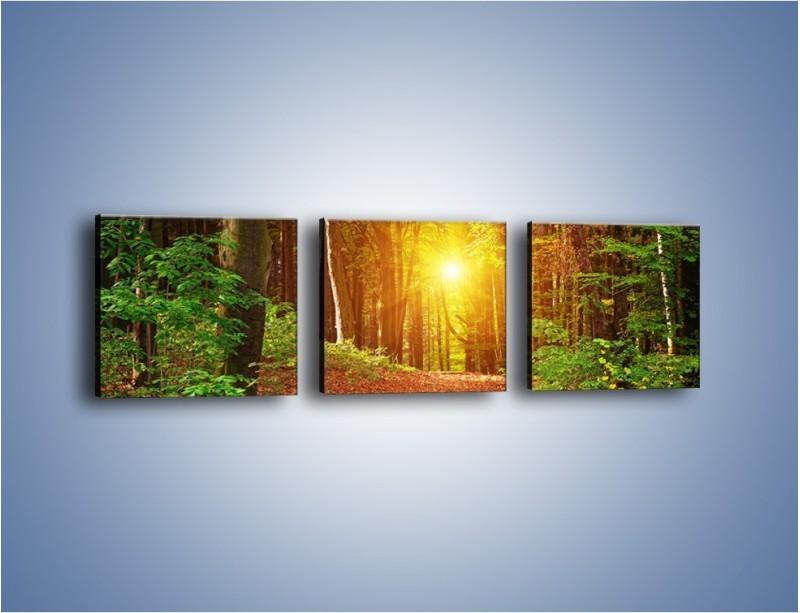 Obraz na płótnie – Polski krajobraz leśny – trzyczęściowy KN1257AW1