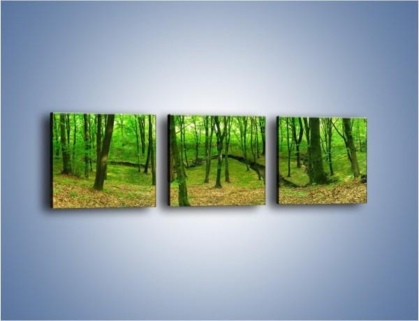 Obraz na płótnie – Wąskie spojrzenie na las – trzyczęściowy KN1264AW1