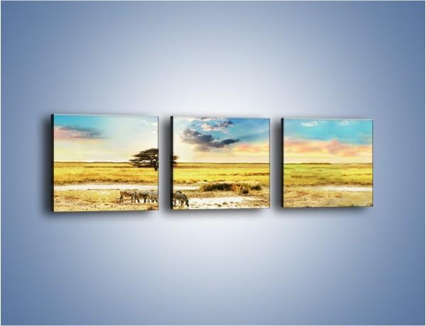 Obraz na płótnie – Zebry na sawannie – trzyczęściowy KN1298AW1