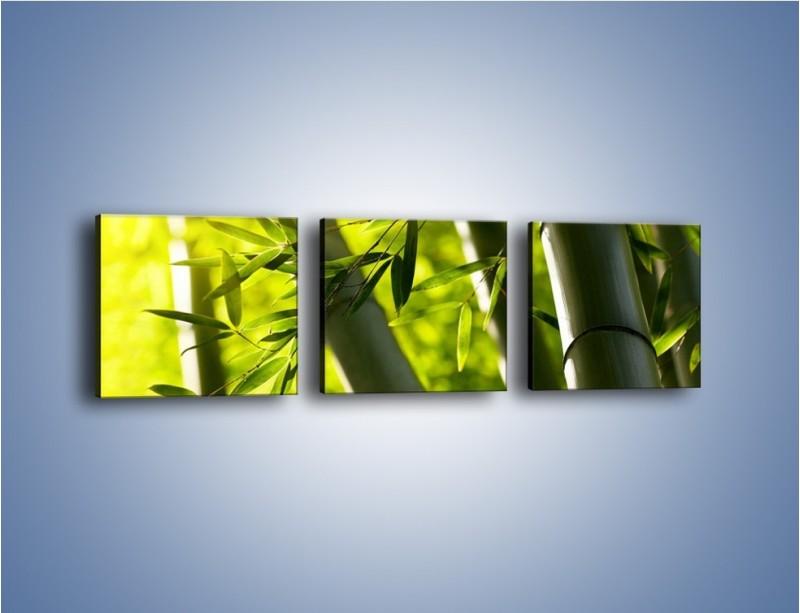 Obraz na płótnie – Twarde łodygi bambusa – trzyczęściowy KN1314AW1