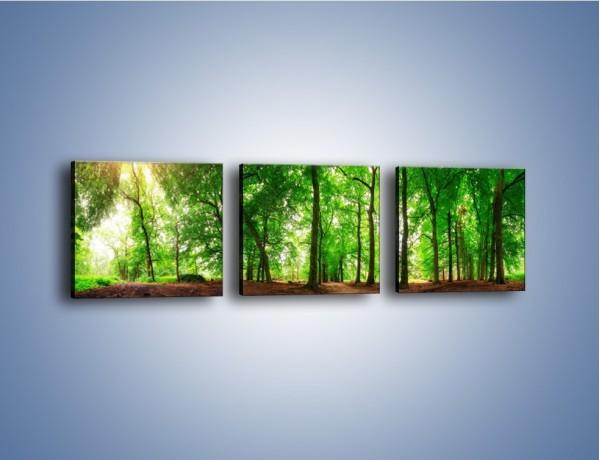 Obraz na płótnie – Zieleń i goła ziemia – trzyczęściowy KN1339AW1