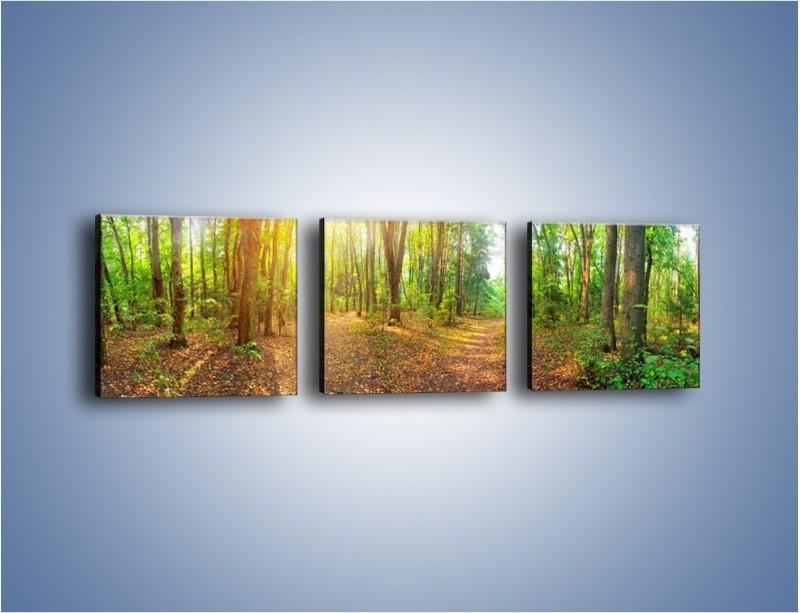 Obraz na płótnie – Przejrzysty piękny las – trzyczęściowy KN1344AW1