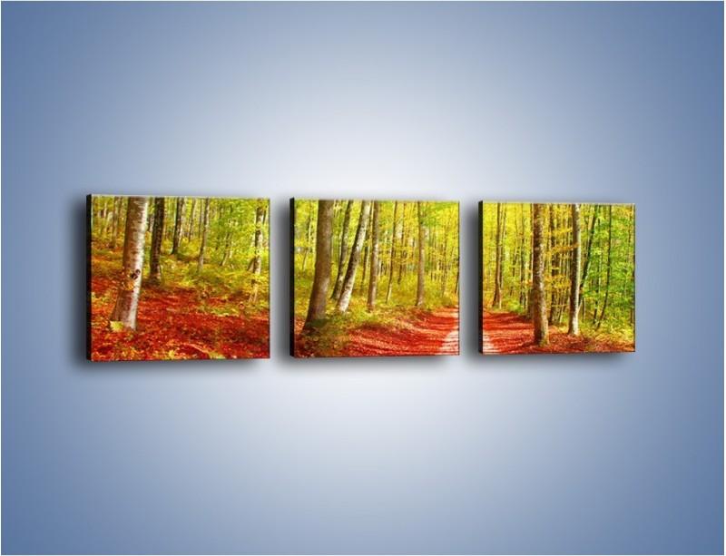Obraz na płótnie – Brzózki liście i las – trzyczęściowy KN1345AW1