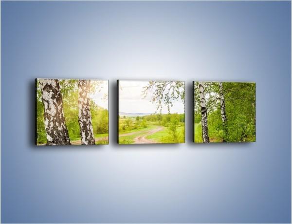 Obraz na płótnie – Polski las i brzozy – trzyczęściowy KN1348AW1