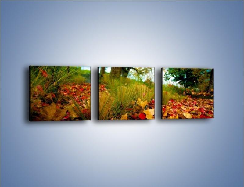 Obraz na płótnie – Droga usłana liśćmi – trzyczęściowy KN172W1