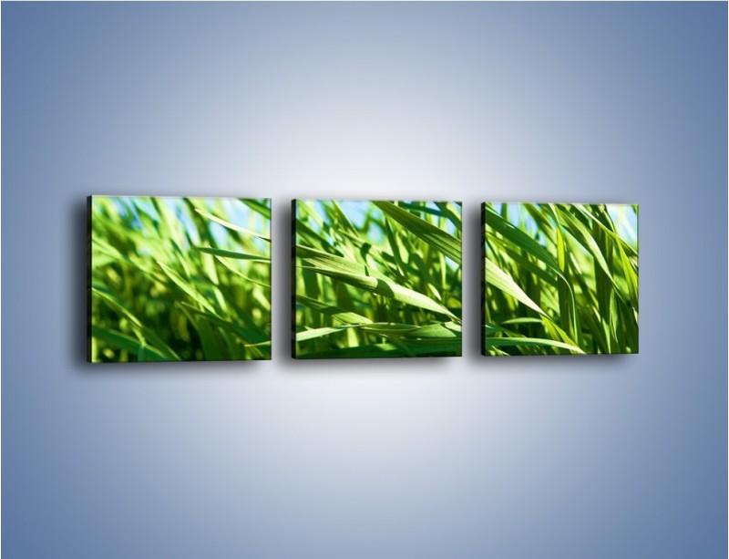 Obraz na płótnie – Wiatr w łodygach – trzyczęściowy KN176W1