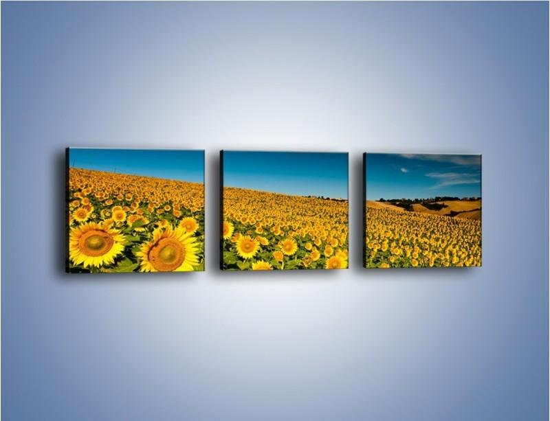 Obraz na płótnie – Słonecznikowe uśmiechnięte główki – trzyczęściowy KN205W1