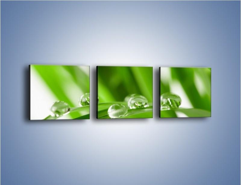 Obraz na płótnie – Krople rosy na liściu – trzyczęściowy KN339W1