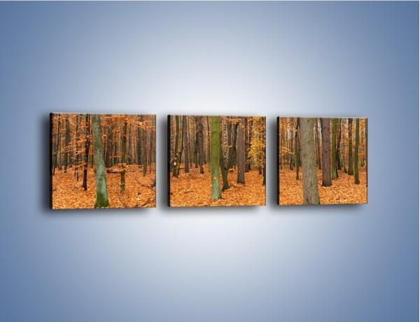 Obraz na płótnie – Las obsypany jesiennymi liśćmi – trzyczęściowy KN396W1