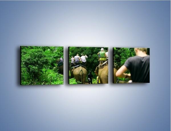 Obraz na płótnie – Podróż na słoniu – trzyczęściowy KN414W1