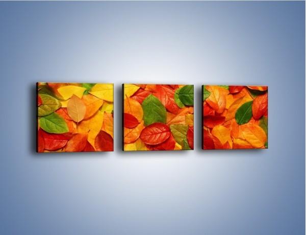 Obraz na płótnie – Wszystkie kolory listków – trzyczęściowy KN490W1