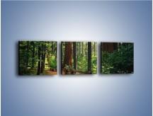 Obraz na płótnie – Chodźmy do lasu – trzyczęściowy KN611W1