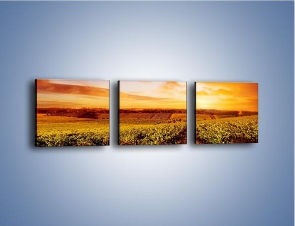 Obraz na płótnie – Ziemia i uprawy – trzyczęściowy KN673W1