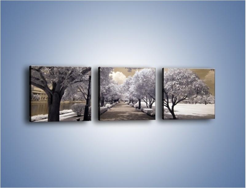 Obraz na płótnie – Parkowa aleja w sepii – trzyczęściowy KN734W1