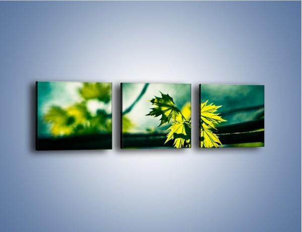 Obraz na płótnie – Liść w odbiciu świetlnym – trzyczęściowy KN763W1