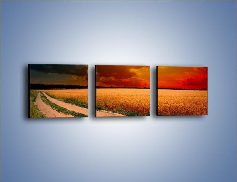 Obraz na płótnie – Zbożowa polana i jej cały urok – trzyczęściowy KN776W1