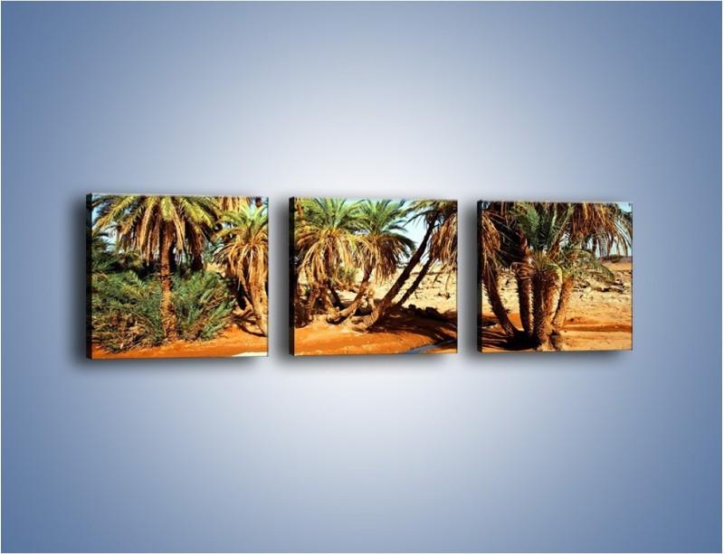 Obraz na płótnie – Palmowa rodzina w komplecie – trzyczęściowy KN809W1