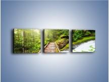 Obraz na płótnie – Bezpieczna droga przez las – trzyczęściowy KN922W1