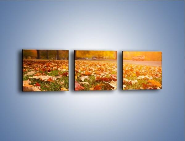 Obraz na płótnie – Jesień na trawie – trzyczęściowy KN966W1