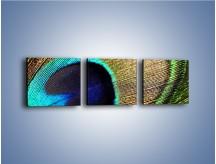 Obraz na płótnie – Cudowne pawie oko – trzyczęściowy O048W1