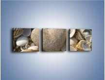 Obraz na płótnie – Miłość do muszli i morza – trzyczęściowy O132W1