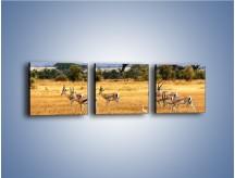 Obraz na płótnie – Antylopy w słonecznej afryce – trzyczęściowy Z003W1