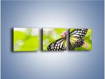 Obraz na płótnie – Motyl w letni poranek – trzyczęściowy Z004W1