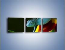 Obraz na płótnie – Liść w łapce kameleona – trzyczęściowy Z005W1