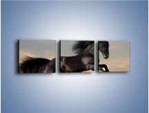 Obraz na płótnie – Czarny koń w galopie – trzyczęściowy Z008W1