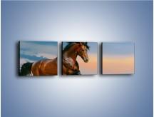 Obraz na płótnie – Brązowy koń na pustyni – trzyczęściowy Z011W1