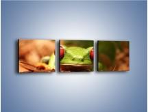 Obraz na płótnie – Bystre oczka małej żabki – trzyczęściowy Z023W1